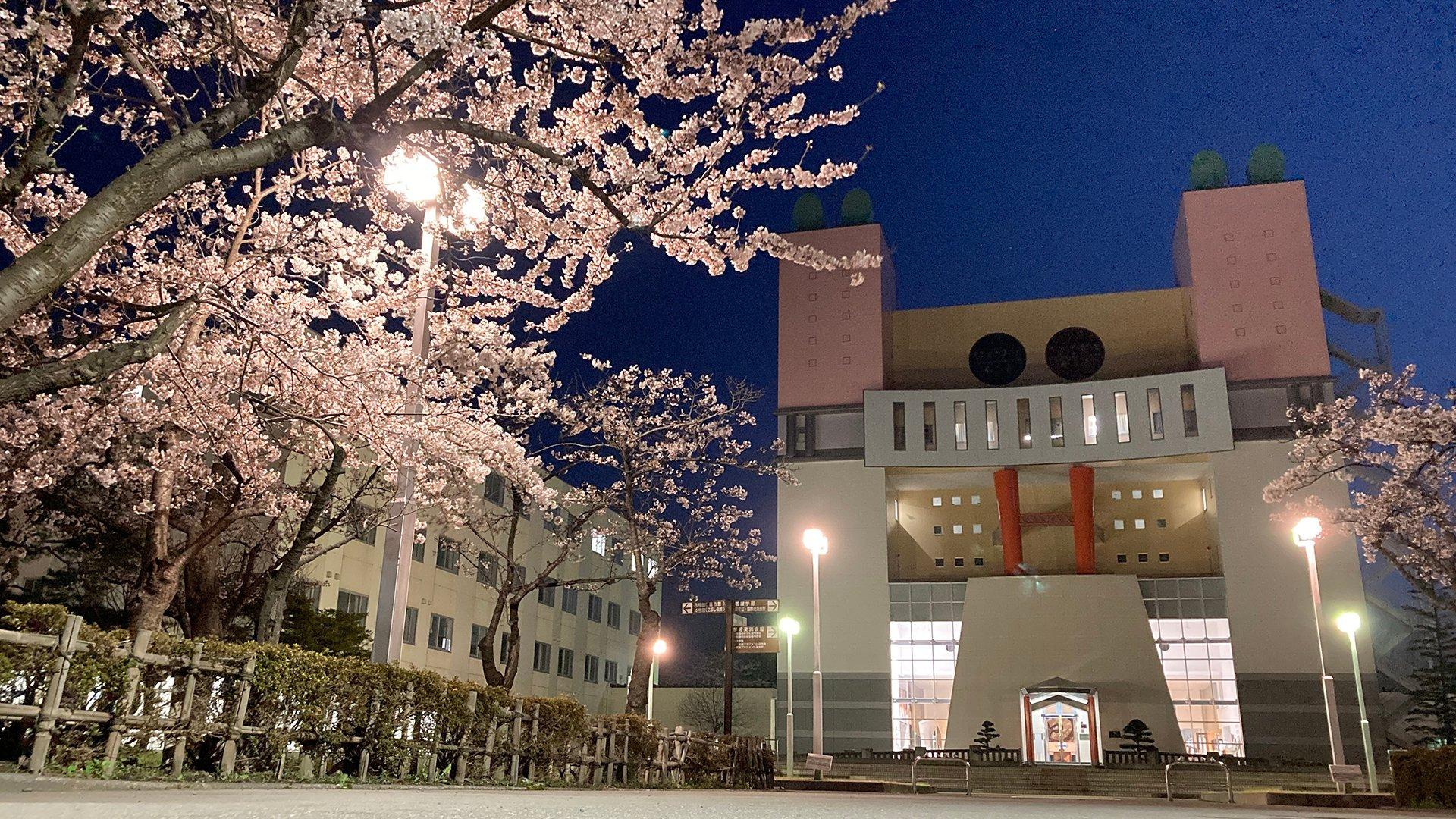 キャンパスの桜が見頃です(2021)